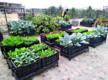 Kolkatans turn to organic farming