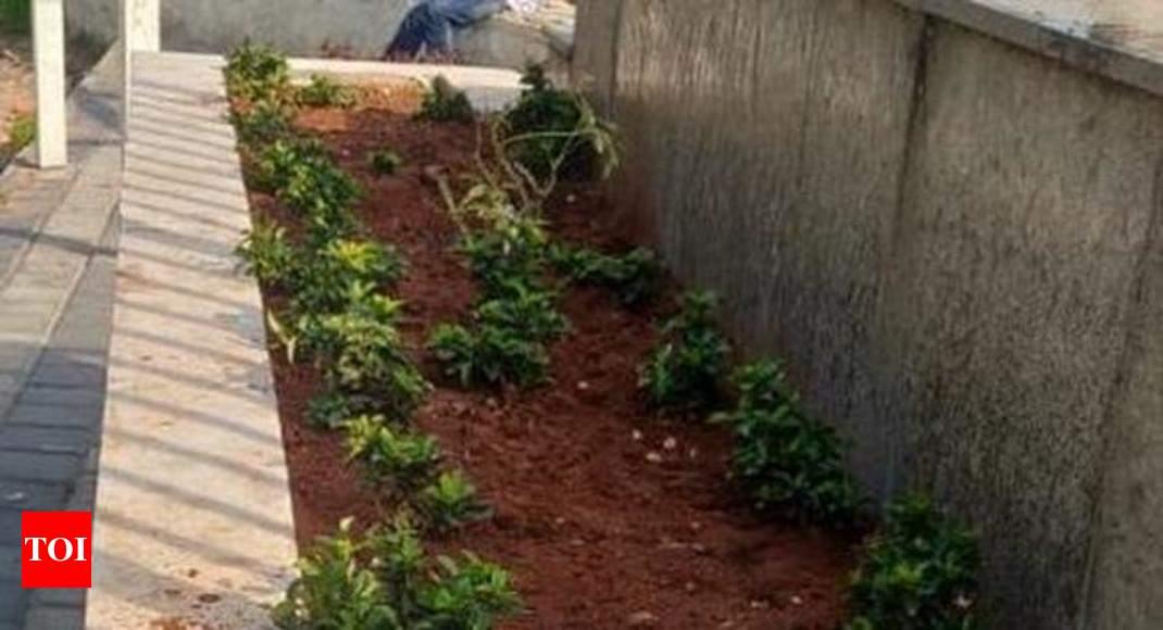 Chamundi Hills viewpoints graffiti angers locals