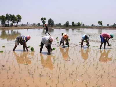 Punjab: Farmers sceptical of 8 hour uninterrupted power