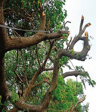 Transporters, desilting experts, road builders win bids to prune trees