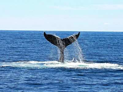 Do you know that whale's vomit is worth Rs 1.7 crore. Here's why!