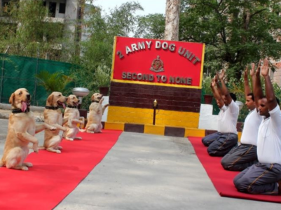 WATCH: Army dogs performing yoga