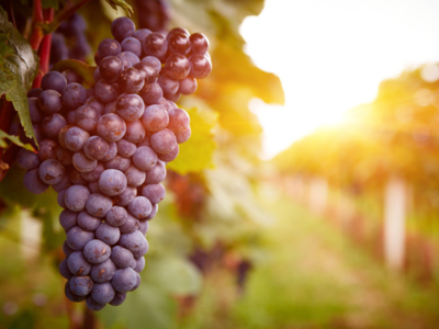 Read this to know why grapes are good for your health!