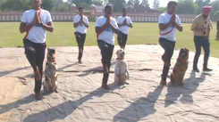 International Yoga Day: Dog squad of BSF performs yoga in Jammu