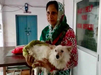 Image result for dog raped in india