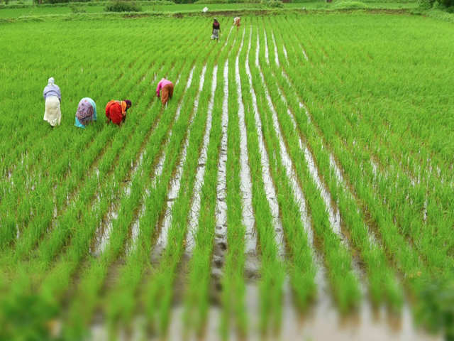 Image result for New Technology Developed by Cochin University of Science and Technology May Help Double Farmers' Income
