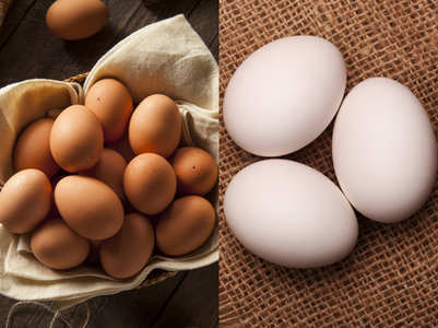 White eggs versus brown eggs
