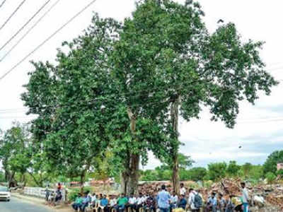 Madurai: Villagers celebrate 100th birthday of 2 banyan