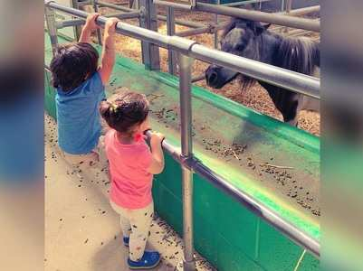 Taimur and Inaaya enjoy their day at the farm