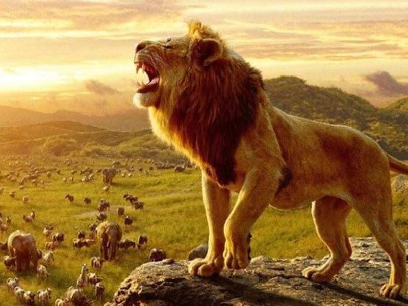 The Lion King Box Office Collection Week 1 Disney S Live Action Remake Sees An Excellent First Week English Movie News Times Of India