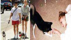Joe Jonas and Sophie Turner suffer major trauma after death of their pet dog