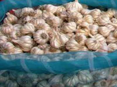 Kodaikanal's 'hill garlic' gets GI tag   Chennai News