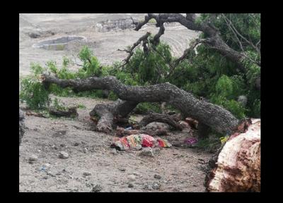 Falling tree branch kills woman in Tamil Nadu | Madurai News - Times
