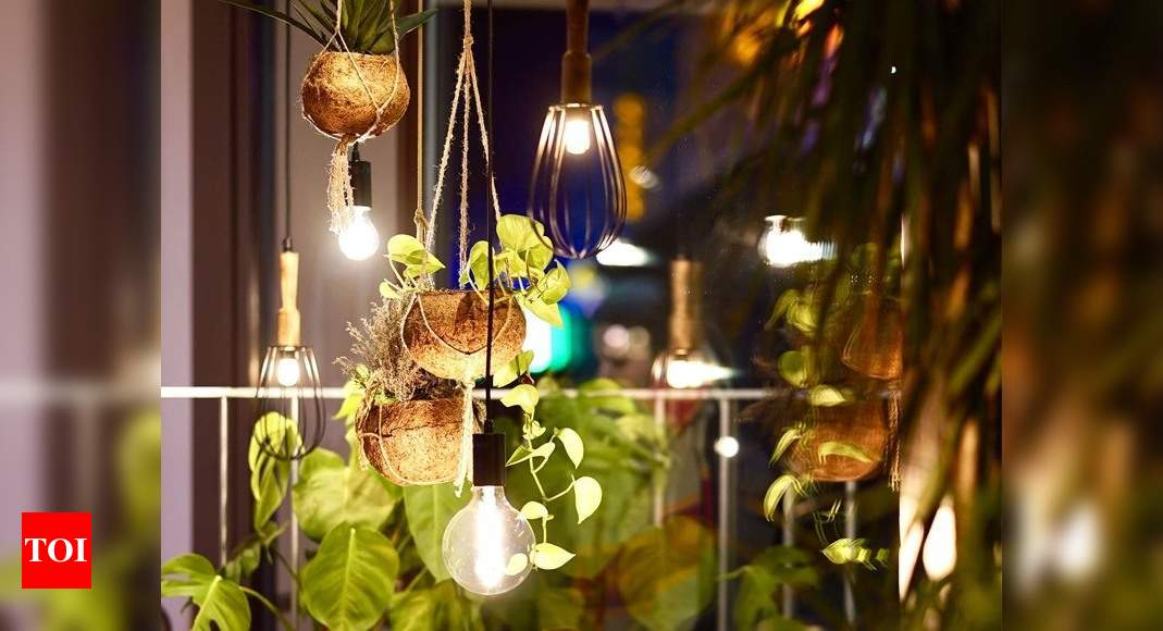 Indoor Plants Best Indoor Plants For Small Spaces And Apartments Most Searched Products Times Of India