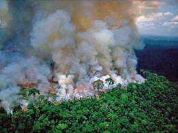 Mahesh Babu, Alia, Leo fall prey to fake photos of Amazon forest fires