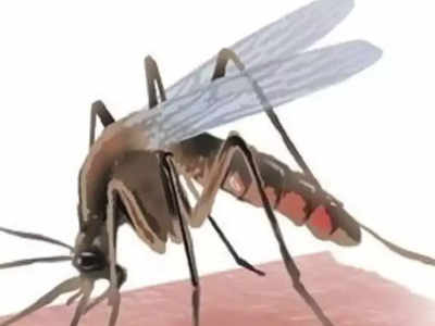 Dengue spreading like wildfire, explain steps: HC to
