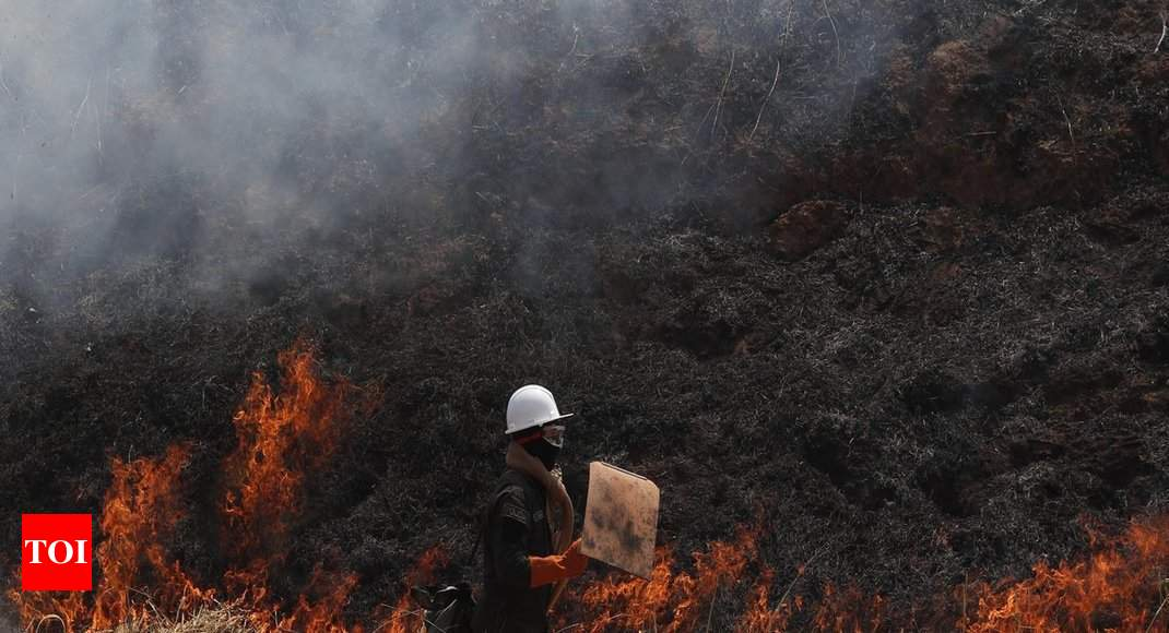 Bolivia has lost 1 7 million hectares to fire: government