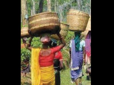 Only two tea gardens declare Puja bonus by September 5