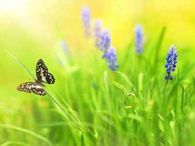 Arunachal Pradesh: 105 butterfly species documented in Ziro