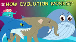 Children English Nursery Story 'What Is Evolution? - Compilation | The Dr. Binocs Show' - Kids Nursery Stories In English