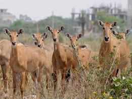 Celebs slam killing of nilgais in Bihar