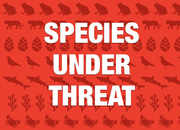 More than 28,000 species face risk of extinction