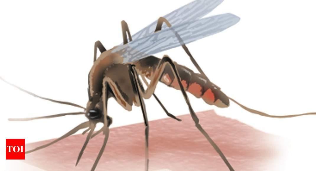 Dengue claims 7 lives in a week in Jamnagar
