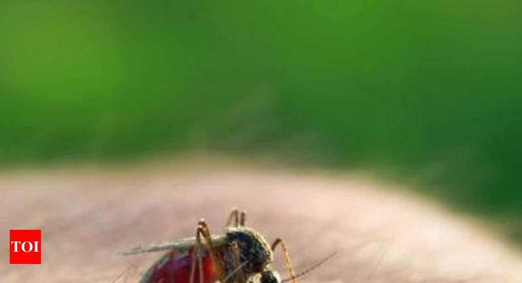 Dengue deaths lost in number game in Gujarat