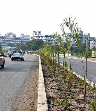 Native is out, exotic is in for Smart City body