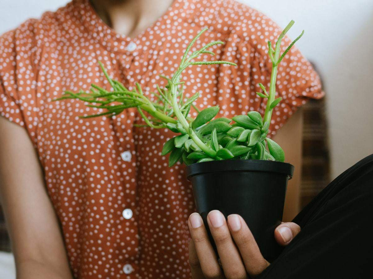 Air Purifying Plants Bring Home These Powerful Air Purifying Plants To Improve Air Quality Most Searched Products Times Of India