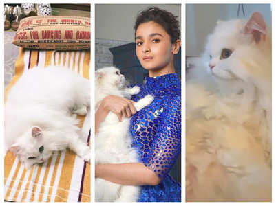 Alia shares pics of her furry friend Edward