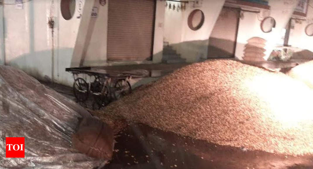 Unexpected rain causes damage of groundnut