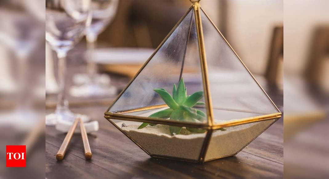 Terrarium Plants Create A Patch Of Greenery Inside Your Home Most Searched Products Times Of India