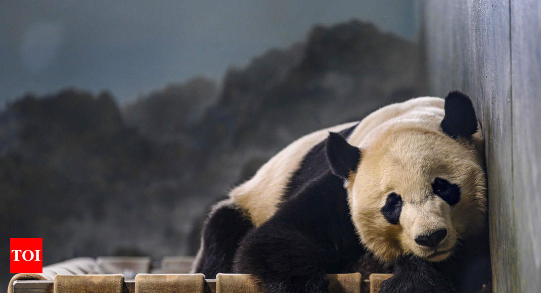 Panda Bei Bei says bye bye to US, heads 'home' to China