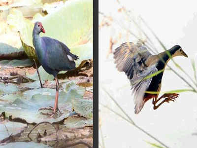 Chandigarh Birds Of Different Feathers Flock Together At Sukhna