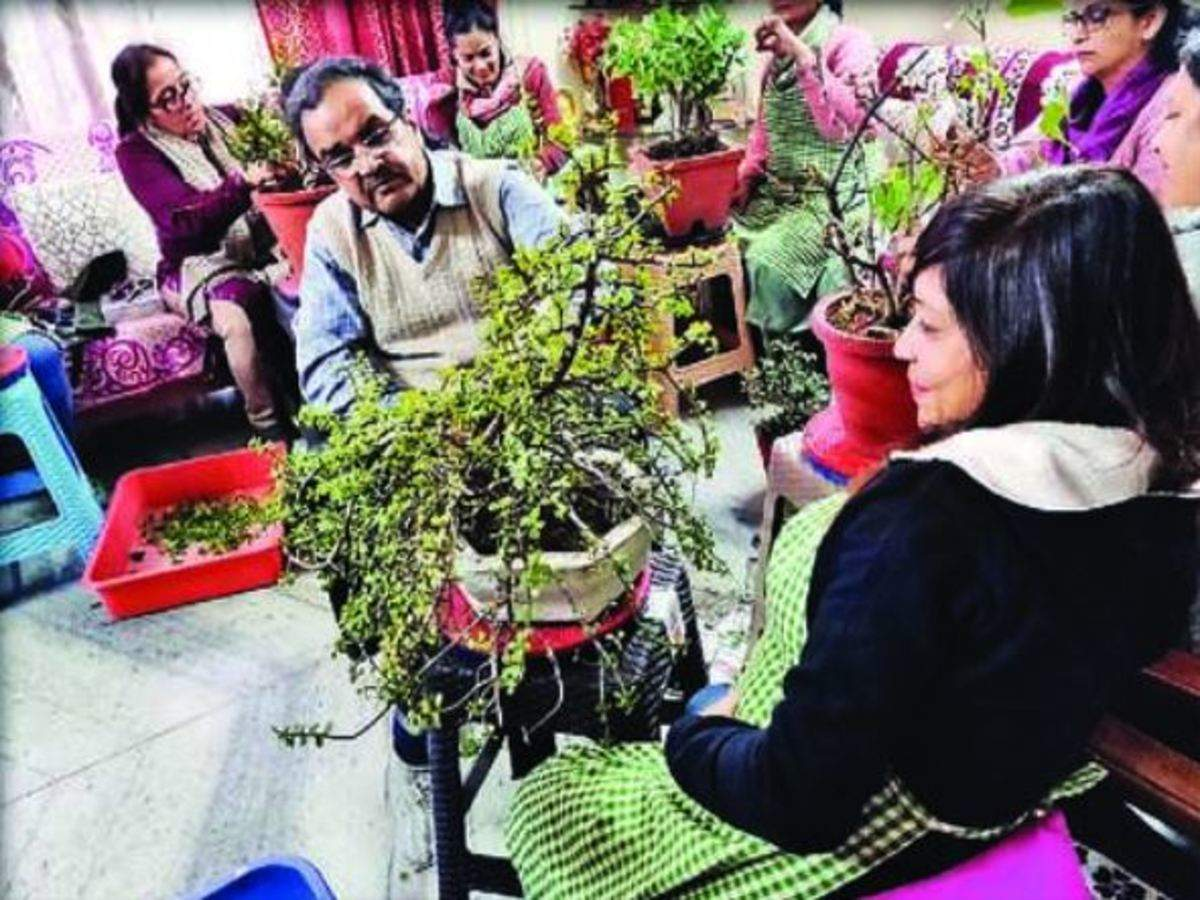 Lord Of Small Things Growing One Bonsai At A Time Meerut News Times Of India