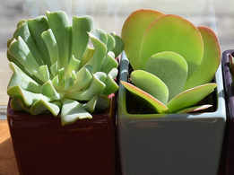 Holiday Special: How to create small window garden with waste materials