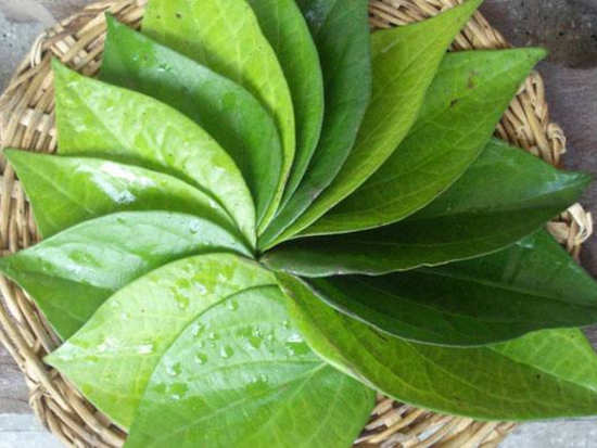 All the good things that betel leaves can do to your health and beauty