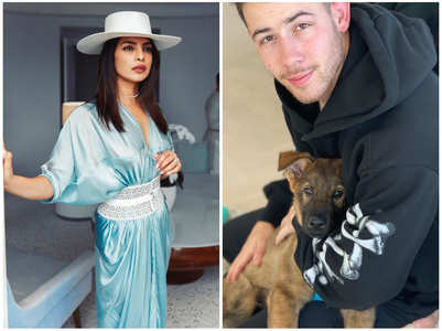 Nick reveals Priyanka is upset with dog Gino