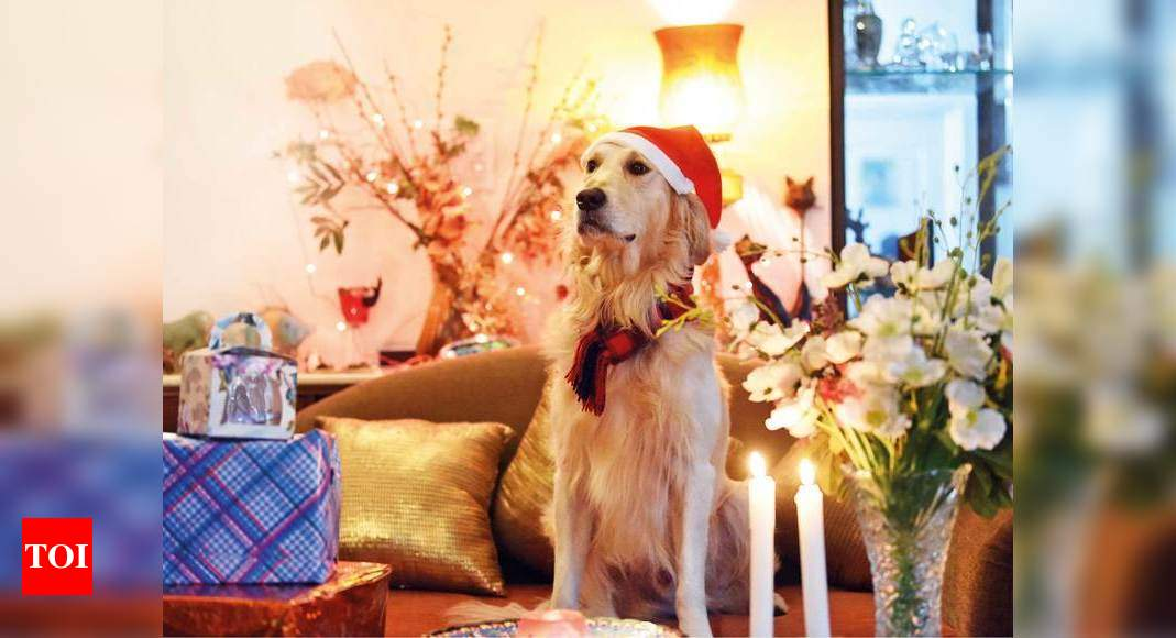 Pet parents set to make it a merry Christmas for their furry babies