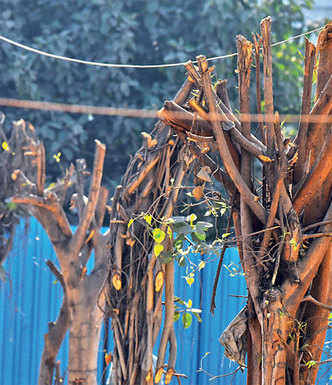 Trees hacked beyond lawful limits by car outlet owner