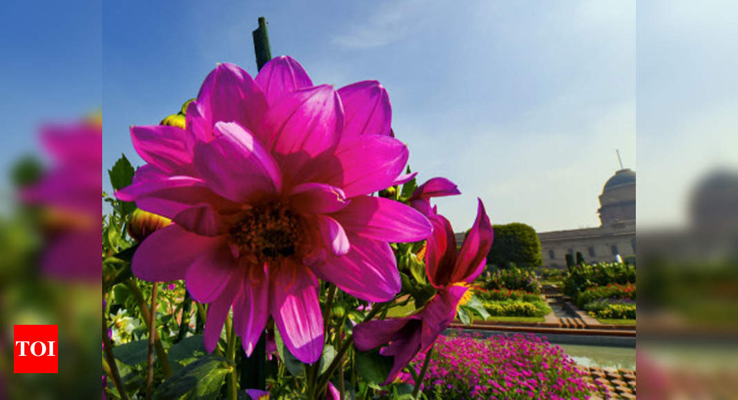 Delhi Mughal Garden To Open Doors To Public From Feb 5 As Fresh Flowers Bloom Delhi News Times Of India