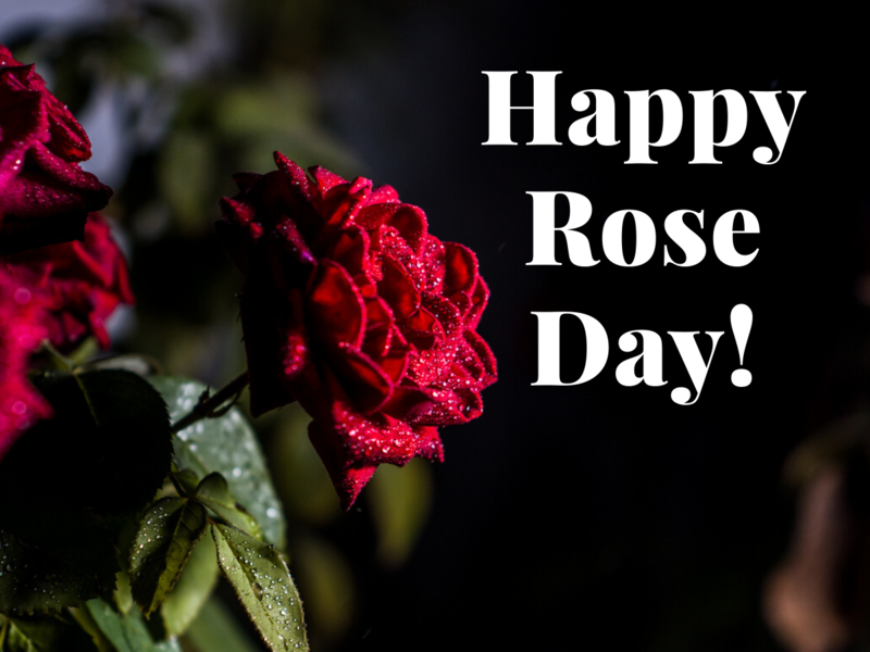 Happy Rose Day!