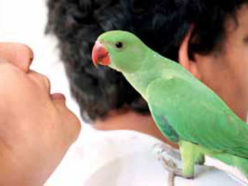 Let them soar: A sweet story of baby parrots