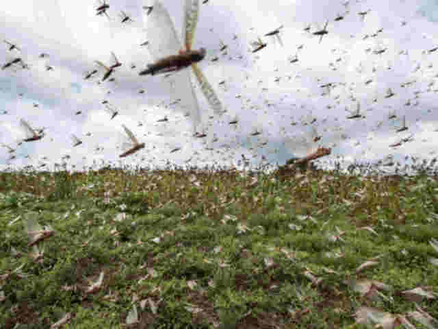 Researchers develop smartphone app to tackle crop pests