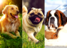 5 popular dog breeds and the story of their origin