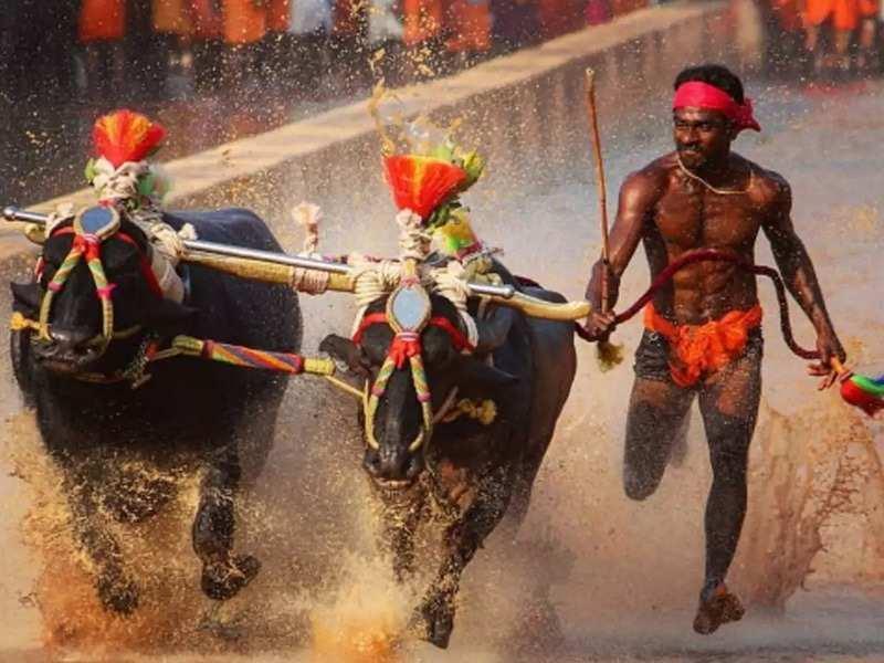 Kambala sport makes it to the big screen in Sandalwood