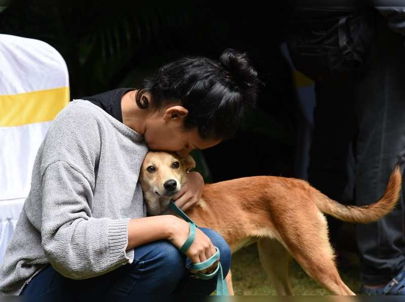 BBMP moots license fee waiver to promote adoption of indie dogs