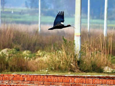 Authorities asked to demarcate area of Ekana Wetland | Lucknow ...