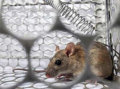 Why the new Hantavirus should not be a reason for panic